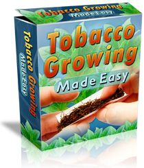 Tobacco Growing Made Easy http://www.mobilemoneygenerator.net Click On Tobacco Growing Made Easy