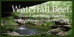 Arkansas Source - Grass fed beef.  Waterfall Beef Home Page