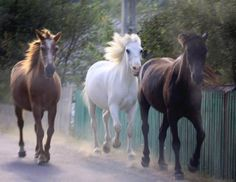 Horses running in Neamt County, Romania #priNeamt