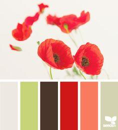poppy hues
