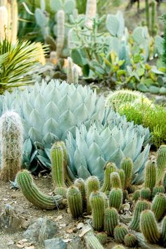 Lots of great drought tolerant gardens on this page
