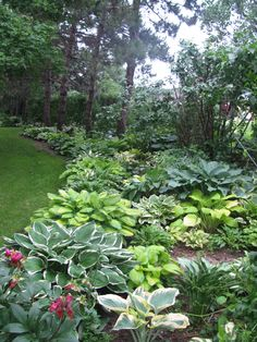 Hosta gardens are perfect for shade.