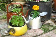 Tea Kettle, pot Planters. (I have an old perc-coffee kettle from an old cabin that I planted.)