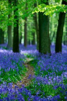 Bluebells a good idea for 'color' in a shade garden