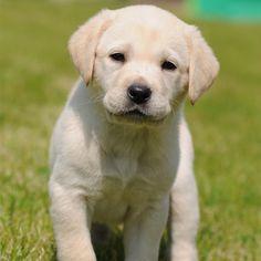 Sponsoring a guide dog for the blind November 2012 to November 2013