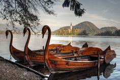 Wooden Swans on Lake Bled, Slovenia