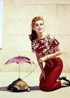 Ann-Margaret walking a turtle with an umbrella, 1960s.