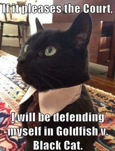 Goldfish v. Black Cat