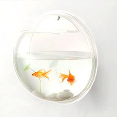 Wall Deco - acrylic design is a safe and effective home for fish, your mini Zen garden, a favorite plant, or anything else you wish to display in its compact orb-like silhouette. Easily hung like a picture frame.  Neat idea!