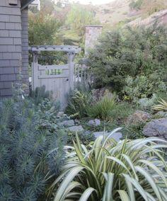 Garden Secrets: What a Landscape Architect Plants at Home Gardenista  Increible jardín.