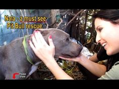 Nala - Scared stray Pit Bull living in a ditch - rescued! Please share o...