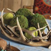 Cool centerpiece of antlers and moss balls
