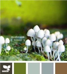 Mushroom Tones