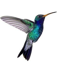 InkWear Hummingbird Tattoo!!!!!!!