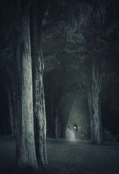 A walk through the woods at night