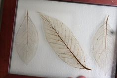 Make your own leaf skeletons.