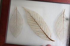 Make your own leaf skeletons.