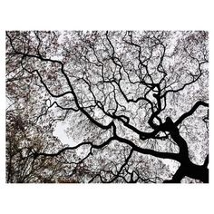 Gallery-wrapped canvas giclee print showcasing a Japanese maple tree. Made in the USA.  Product: Wall decor Construc...