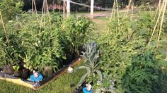 Update! Huge Growth! The Self Watering Grow Bag Garden! grow bag, bag garden, garden idea