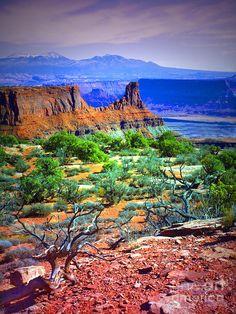 ~ Canyonlands National Park ~ Utah....