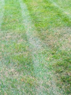 Continue mowing lawns until growth stops.