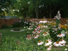 back yard garden.