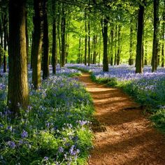 Forest path. Purple flowers.