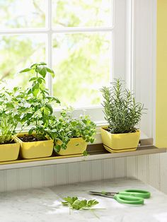 Personal Herb Garden on a little metal ledge you install in little garden planters that fit perfectly on them! cute!