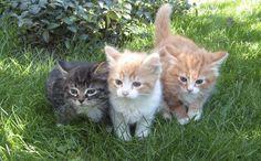 three cutes #kittens ever!!!!