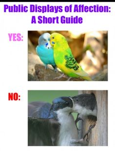 Guide to public displays of affection - www.meme-lol.com short, funny animals, first kiss, funny pics, laugh, funni, humor, birds, kisses