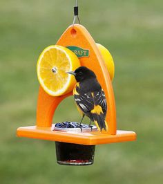Another great feeder for orioles and fruit-loving birds. Oriole Delight Feeder at Duncraft