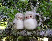 Little wool owls