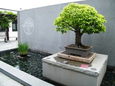 Entrance to National Bonsai & Penjing Museum