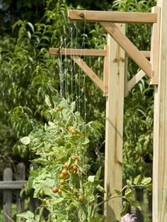 vertical gardening trellising tomatoes  - I like this idea.  You could add decorative metal brackets onto a fence or brick wall and do the same. Plant, Garden Trellises, Organic Gardening, Vegetable Garden Ideas Trellis, Tomato, Vertic Garden, Growing Up, Small Spaces, Vegetable Gardening