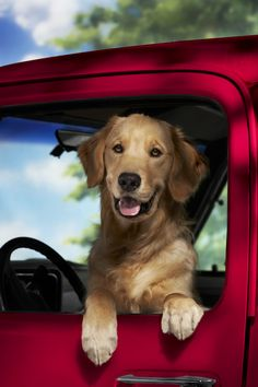 Dogs who love to travel can not wiat to hope in the car.  #hund #urlaub #reisen