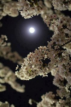 Springtime moon