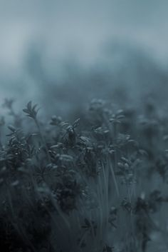 In the faint moonlight, the grass is singing... ~T.S. Eliot::cM
