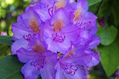 Blooms by Miss Molly B, via Flickr