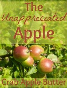 The Unappreciated Apple: Crab Apple Butter   The 104 Homestead
