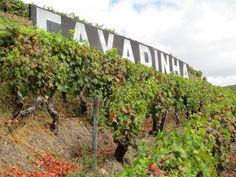 Harvest at Warre's VPS Blog News   The Vintage Port Site