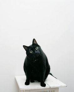 Black cats aren't bad luck