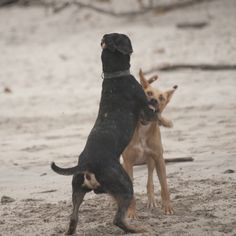 How to Safely Break Up a Dog Fight #dogpark #dogs