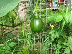 Sometimes I think summer in Alaska is too short for growing a pumpkin.  —Rod Boyce, managing editor