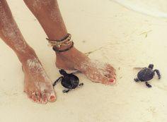 Turtles:  I love!!