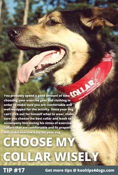 Choose His Collar Wisely  You probably spend a good amount of time choosing your exercise gear and clothing in order to make sure you are comfortable and well-equipped for the activity. Since your dog can't pick out for himself what to wear, make sure you choose the best collar and leash to accompany him during his times of exercise. Collars that are comfortable and fit properly will make exercise a joy for your dog.