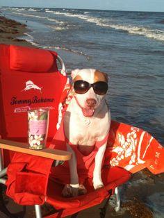 galveston island, lifes a beach, island tx, texa, dog