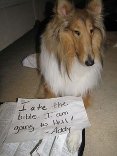 Dog Shaming... Haha needed this for gypsy the other day!