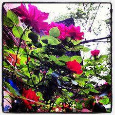 Halo Berlin. NYC. May 2012.