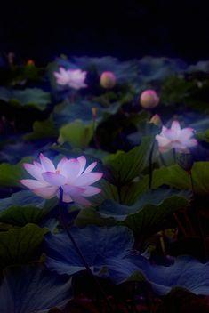 Mystical lotus flower by Mitsu-chan