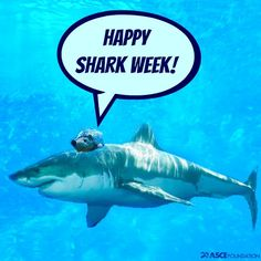 Phil is going a little crazy this week because it's #sharkweek. We're thinking the ocean and water engineers are loving it!
